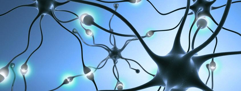 columbia-sackler-test-slide-neurons