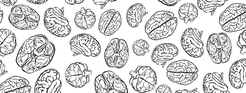 columbia-sackler-test-slide-repeating-brain-drawing